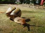 Snail Microworld
