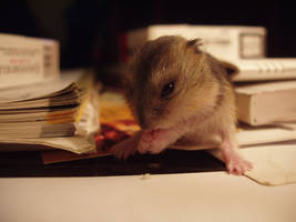 Hamster Ruso 3 by quinti