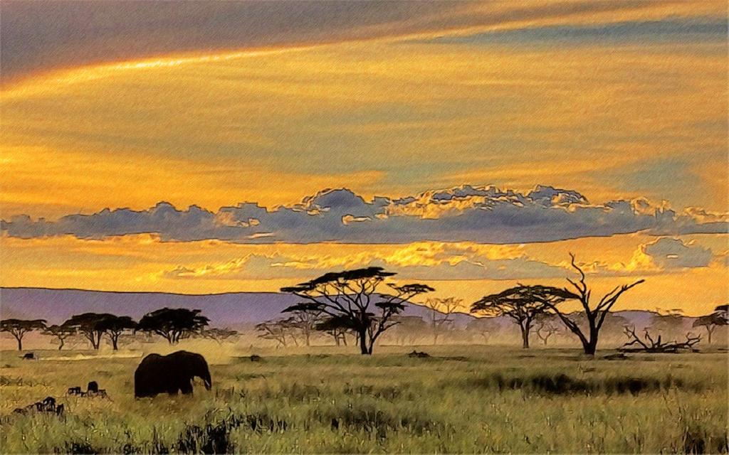 African Safari Wallpaper  yvt2 (1)