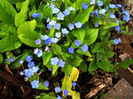 Spring Flowers 13