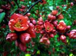 Spring Flowers 16