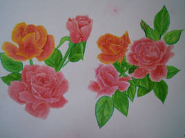Roses by Sea9040