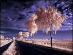 Country Road II infrared...