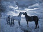 Blue Horses I infrared...