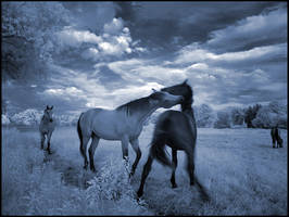 Blue Horses II... by MichiLauke