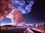 Country Road III infrared...