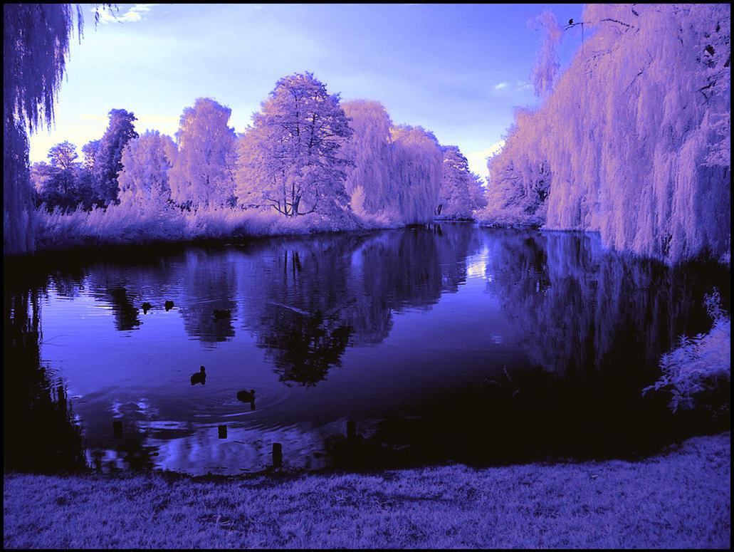 Evening light infrared... by MichiLauke