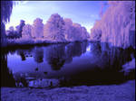 Evening light infrared...