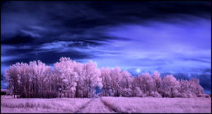 Pink Forrest Pano...