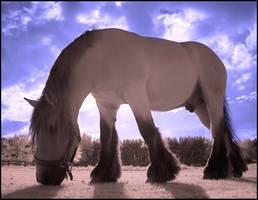 Pink Horse infrared.... by MichiLauke