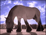 Pink Horse infrared....