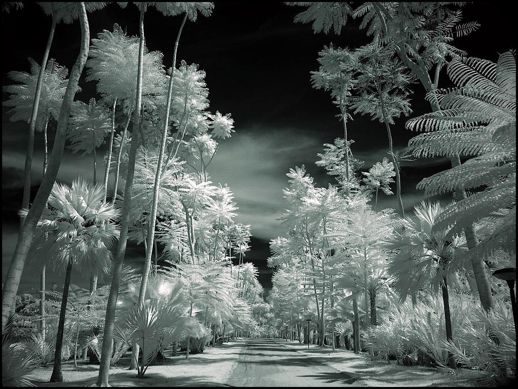 Tropical Garden II infrared... by MichiLauke