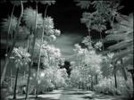 Tropical Garden II infrared...