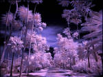Tropical Garden IV infrared