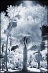 Tropical Garden V infrared...
