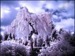Birch Tree...