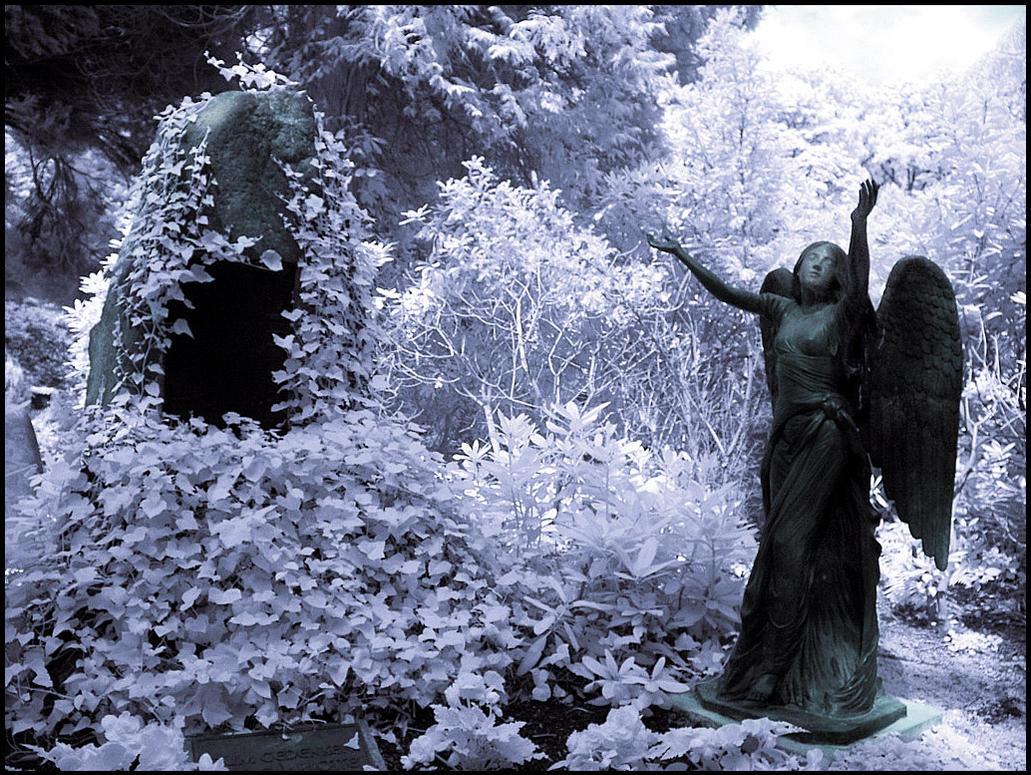 Black Angel infrared... by MichiLauke