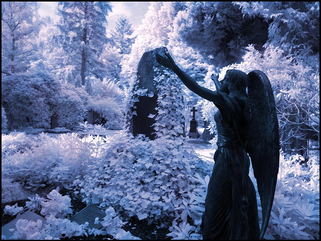 Black Angel II infrared... by MichiLauke