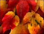 Autumn Leaves III...