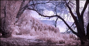 Wolni Lake pano infrared...