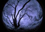 Wonderland infrared...