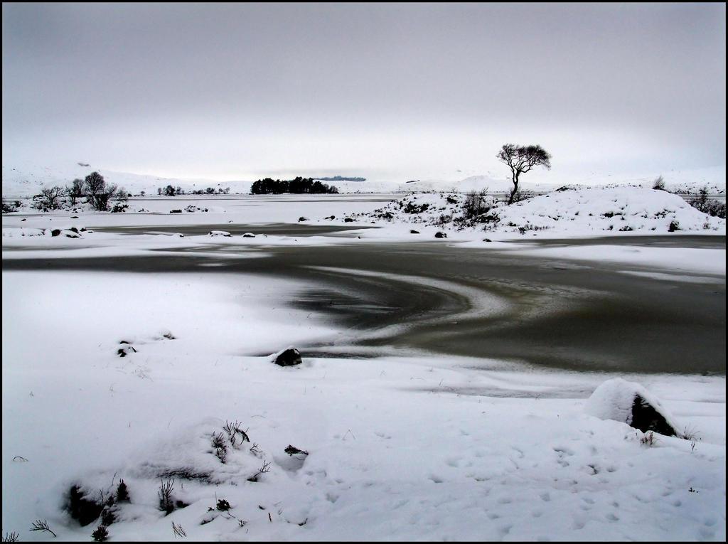 The Tree... by MichiLauke