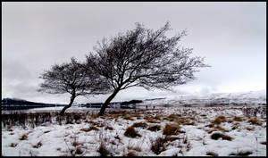 Highlands II...