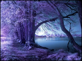Spring Wolni infrared...