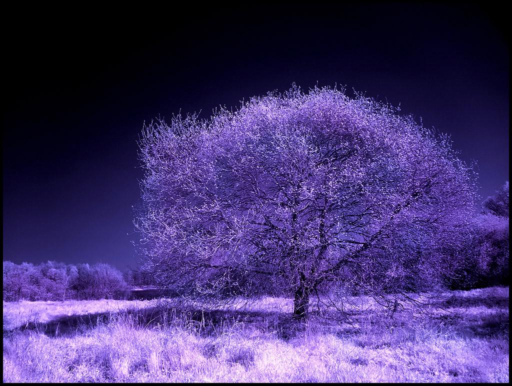 Wolni Spring Tree infrared... by MichiLauke