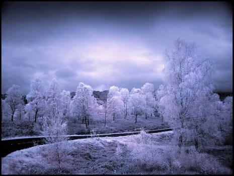 Trossachs Birch Trees Infrared