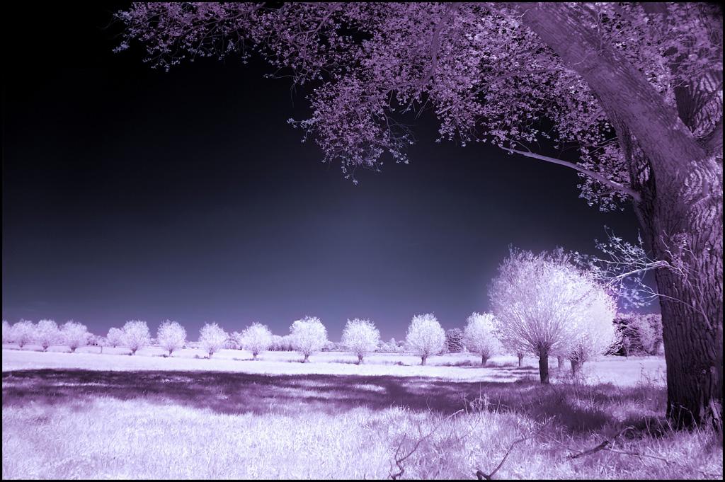 Rope of Pearls III Infrared.. by MichiLauke