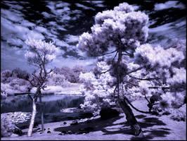 Puschel Trees Infrared... by MichiLauke