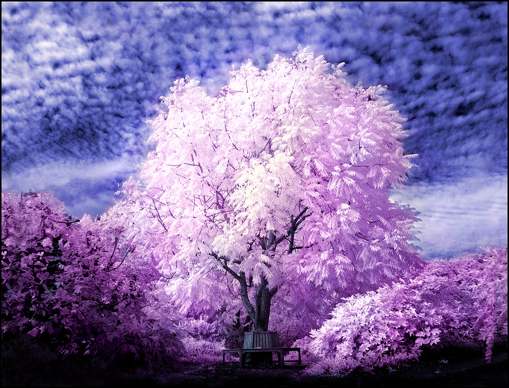 Tree infrared... by MichiLauke