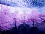 Arboretum Lake III infrared...