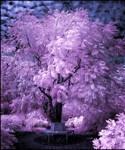 Tree infrared II...