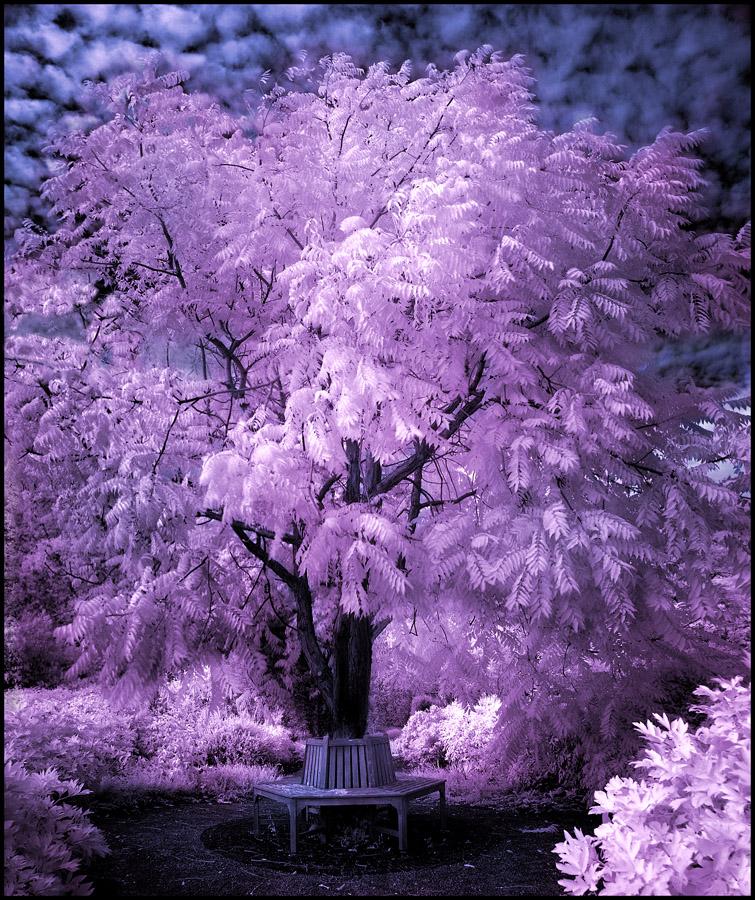 Tree infrared II... by MichiLauke