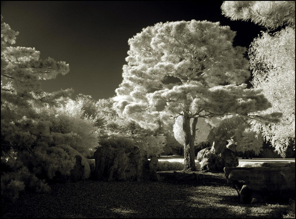 Puschel Tree Infrared II.. by MichiLauke
