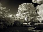 Puschel Tree Infrared II..