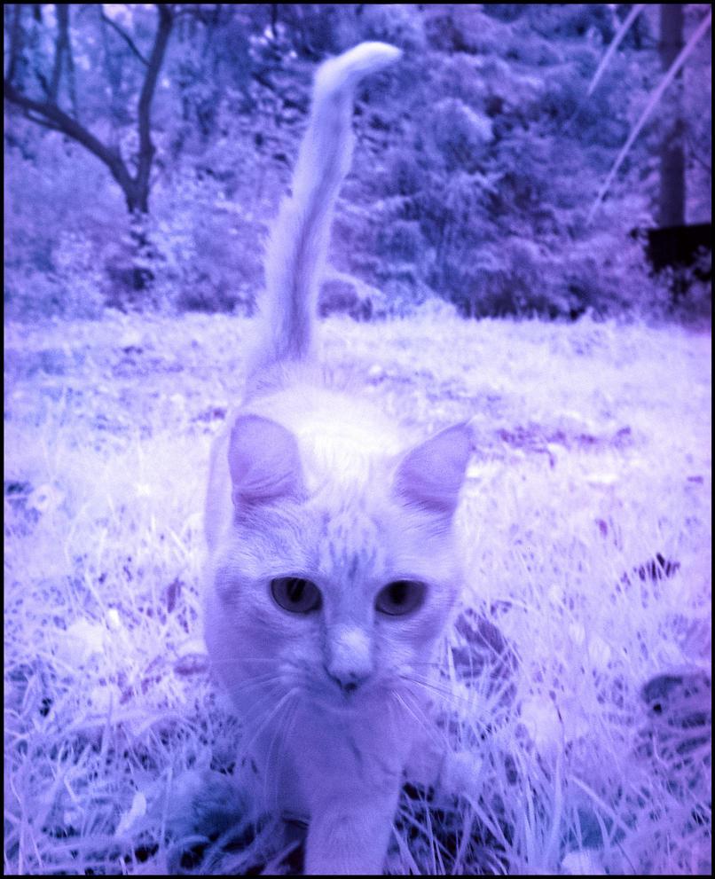 Cat infrared... by MichiLauke