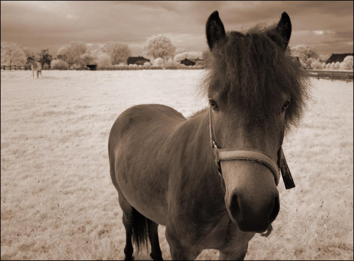 Pony infrared... by MichiLauke