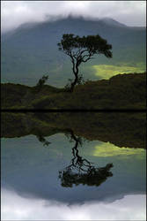 The Tree Loch Nah-Achlaise