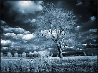 Home Tree II infrared... by MichiLauke