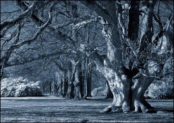 Blue Oak Tree infrared... by MichiLauke