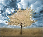 Spring Tree infrared...