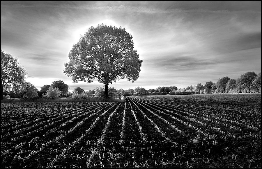 Evening Mood Tree infrared... by MichiLauke
