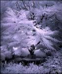 Magic Tree  infrared