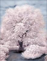 Magic Tree II infrared... by MichiLauke