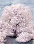 Magic Tree II infrared...