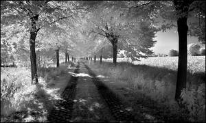 Shady Tree Alley infrared...