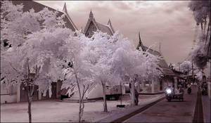 White Trees Koh Larn infrared